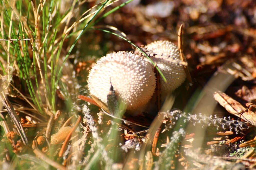 Seeneuputus